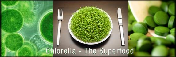 chlorella-the-super-food PHILIPPE-WILLIAM SINCLAIR