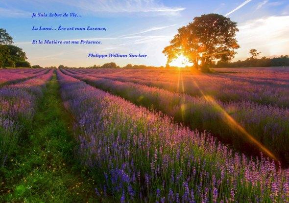 ARBRE DE VIE ANCRAGE PHILIPPE-WILLIAM SINCLAIR